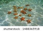 Several Red Cushion Starfish...