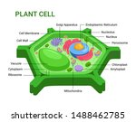 vector infographic of the plant ... | Shutterstock .eps vector #1488462785