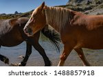 Horses walking near the lake in the mountains in french Pirynees.