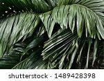 green leaves background and...   Shutterstock . vector #1489428398