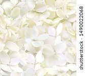 Hydrangea Paniculata Limelight...