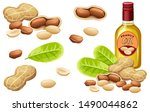 set peanut oil  seed and leaf....   Shutterstock .eps vector #1490044862