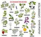 antioxidant foods and herbs.... | Shutterstock .eps vector #1490087528