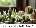 Many Small Potted Cactus In Box ...