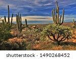 Rich Sonoran Desert Vegetation...