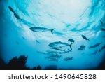 Underwater Shot Of Schooling...