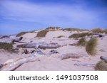Driftwood On A Sandy Dune Beac...
