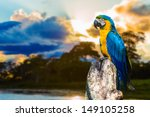 blue and yellow macaw in... | Shutterstock . vector #149105258