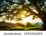 Blazing Sun Tough A Big Tree...