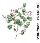 watercolor blooming eucalyptus  ... | Shutterstock . vector #1491800588