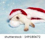 Stock photo little kitten wearing santa s hat sleeping inside santa s hat 149180672