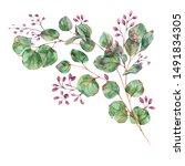 watercolor blooming eucalyptus  ... | Shutterstock . vector #1491834305