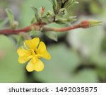 Closeup Of Isolated Yellow...