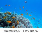 colorful coral reef with hard... | Shutterstock . vector #149240576