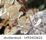corfu  greece   flora and fauna ... | Shutterstock . vector #1492423622