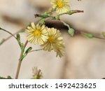 corfu  greece   flora and fauna ... | Shutterstock . vector #1492423625