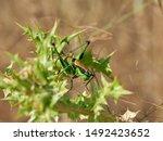 corfu  greece   flora and fauna ... | Shutterstock . vector #1492423652