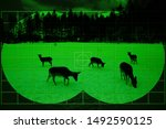 Herd of wild deers on snow - view through night vision - stock photo