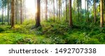 Beautiful forest in springtime with bright sun shining through the trees - stock photo