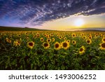 Summer Sunset Scenery  Image O...