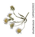 isolated dried herbal for...