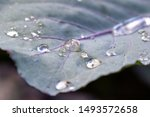 Close Up Of Dewdrops On A...