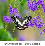 Stock photo butterfly on a violet flower 149365865