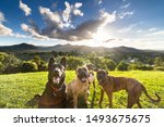 Stock photo smiling group of various dogs looking at camera in front 1493675675