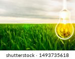 Lamp Over The Tall Green Grass...
