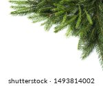 Branches Of Fir Tree On White...