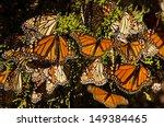 monarch butterflies | Shutterstock . vector #149384465