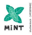 fresh mint leaf. vector menthol ... | Shutterstock .eps vector #1493898482