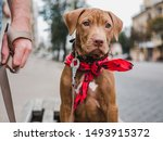 Stock photo pretty puppy of chocolate color and his caring owner on a background of blue sky green trees 1493915372