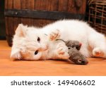 White Cat Playing With A Plush...