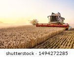 Combine Harvester Harvests Ripe ...
