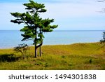The beautiful sand dunes along the shores of Lake Michigan at Kohler Andrae Park at the end of summer when the beauty is at its peak of greenery.  A lone tree rises above the juniper bushes.