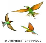 blue tailed bee eater in flight ... | Shutterstock . vector #149444072