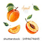 Watercolor Apricot. Botanical...