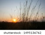 Stalks Of Dry Grass In The...