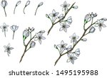 colorful flower vector... | Shutterstock .eps vector #1495195988