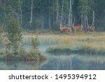 Bohemian Forest  Chalupsk  Sla...