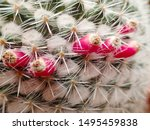Macro Closeup Of A Green Spiky...