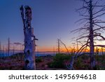 Kamchatka Dead Forest In The...