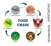 Food Chain Vector Illustration. ...