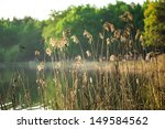 The Reed In The Evening.
