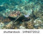 Sea Turtle And Plastic Bag....