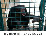 Monkey With A Cub In A Cage...