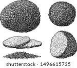truffle illustration  drawing ... | Shutterstock .eps vector #1496615735
