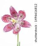 Wonderful Spring Flower...