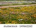 spring wild flowers  west coast ... | Shutterstock . vector #149662262